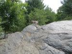 Walter and Gordie climbing rocks